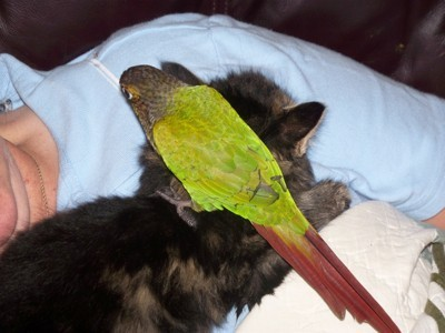 bird sitting on cat