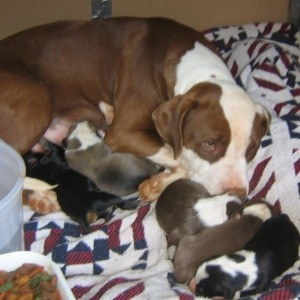 Pit and her litter.