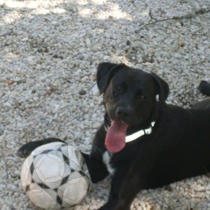 Black dog with soccor ball.