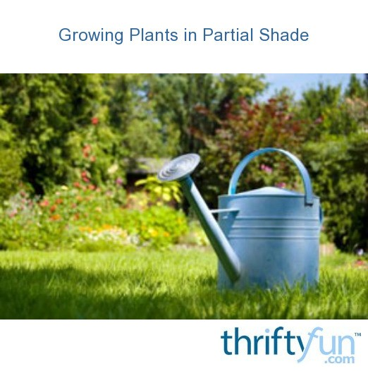 Growing Plants In Partial Shade Thriftyfun