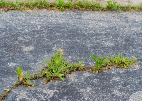 Solutions For Grass Growing In Pavement Cracks Thriftyfun