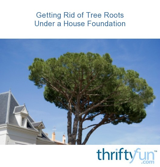 how to get rid of tree roots under house