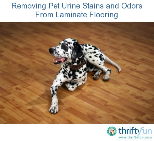 Removing Pet Urine Stains And Odors From Laminate Flooring