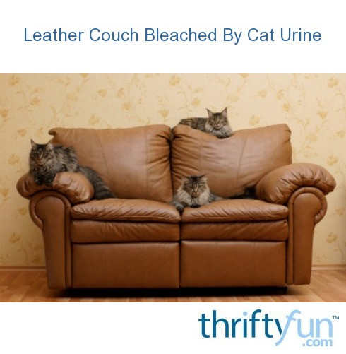 Leather couch bleached by cat urine thriftyfun - Sofas para gatos ...