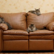 3 cats on a leather couch