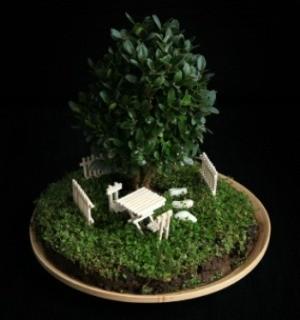 babyu0027s breath in low light - Houseplants For Low Light