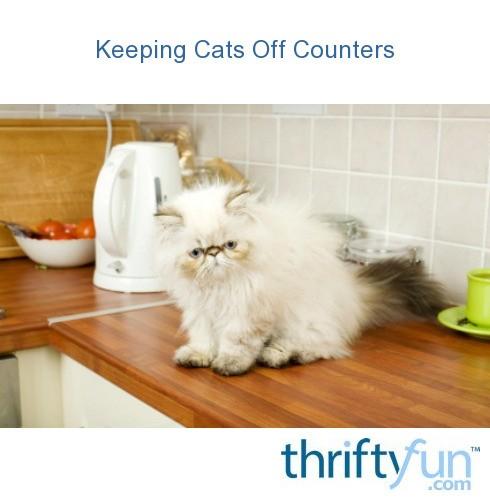 munchkin cats kittens