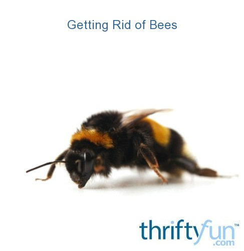 How To Get Rid Of Bees In My Backyard 28 Images