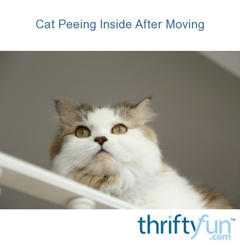how to stop a cat from peeing inside