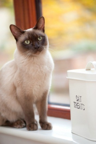 A cat sitting by a container that says cat treats on it.