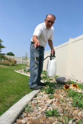 Planting after killing weeds with vinegar thriftyfun - Get rid weeds using vinegar ...