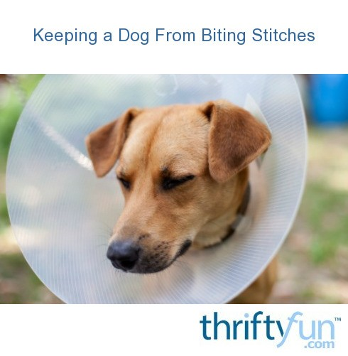 Stop Your Dog Biting Stitches