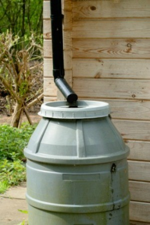 A rain barrel hooked up to a down spout.