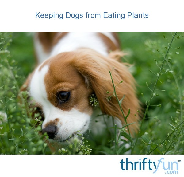 keeping dogs from eating plants