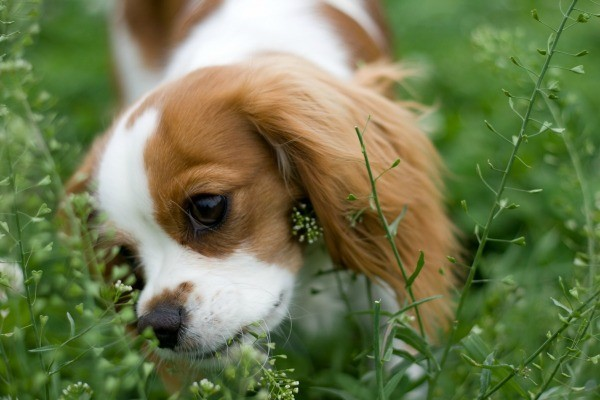 How To Stop My Dog Eating My Plants
