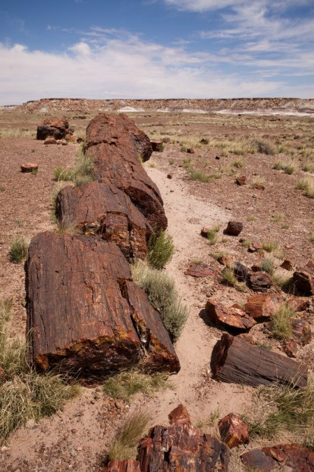 Petrified Forest (Flagstaff, Arizona)