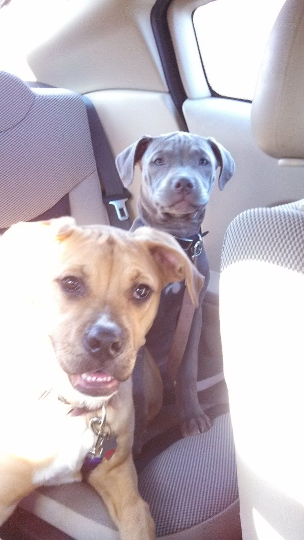 Two dogs in back of car.