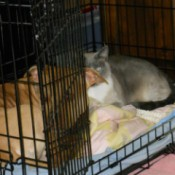 Gidget and Numi in crate.