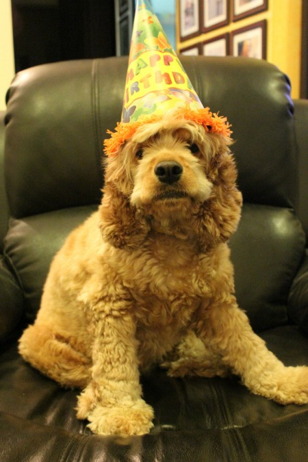 Coco with party hat.