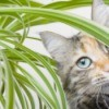 Cat Friendly Plants