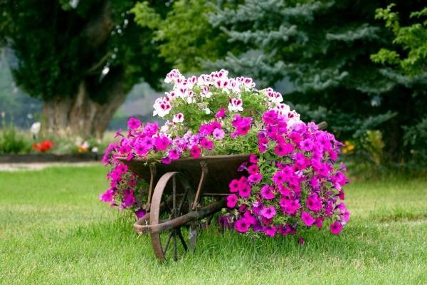 a wheelbarrow planter - Garden Decorations