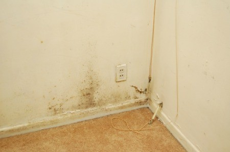 Mold and Mildew in Corner