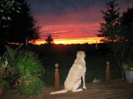 Lab sitting on deck watching sun set.