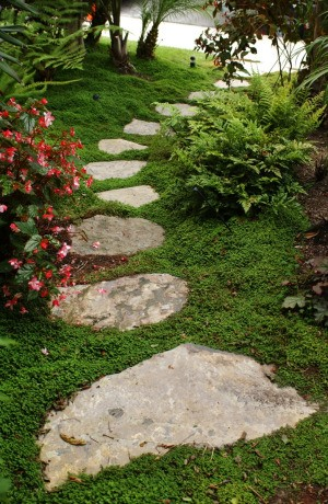 Ground Cover Between Stones