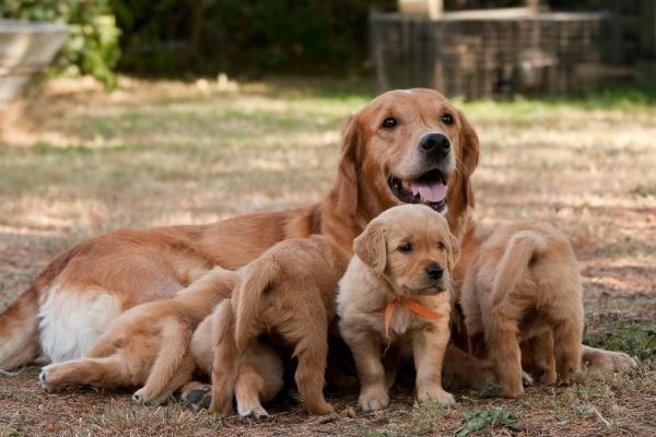 Free mature dog moms
