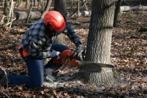 A man cutting down a tree.