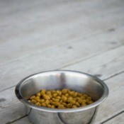 dog food outside