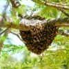 Bee Hive Photos