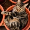 cat in a flower pot