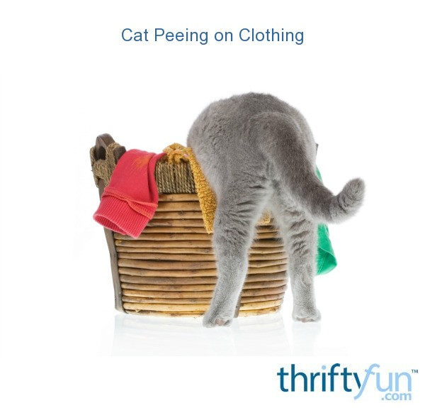 How to Get Cat Urine Smell Out of Clothes - Pets