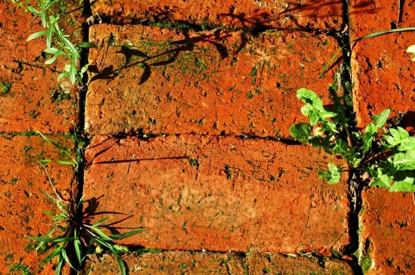 Preventing And Killing Weeds Between Bricks Thriftyfun