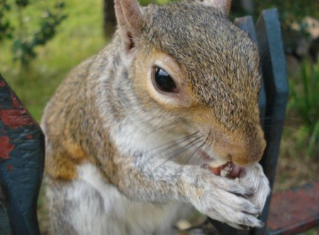 Feeding a Squirrel