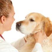 A dog being seen by a veterinarian.