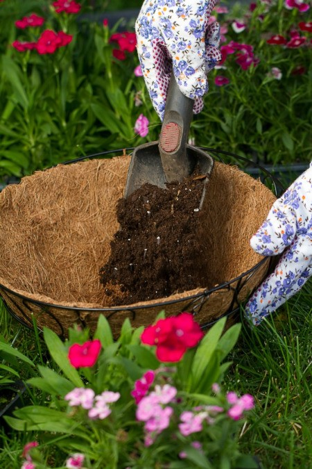 Reusing Potting Soil