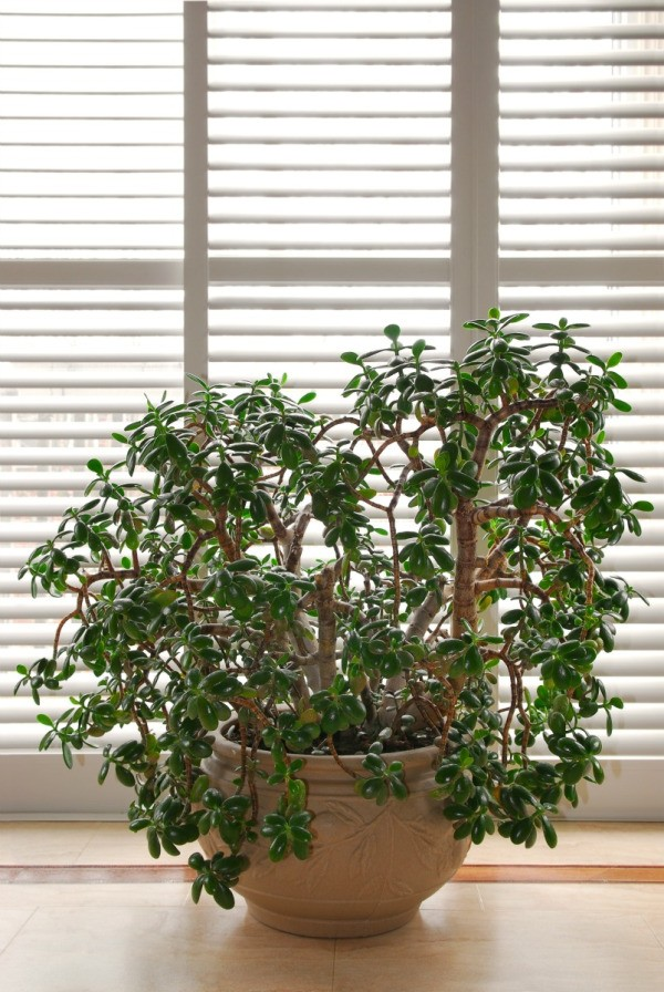 Decorating with houseplants thriftyfun - Plants can improve ambience home ...
