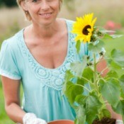 A woman transplanting a sunflower.
