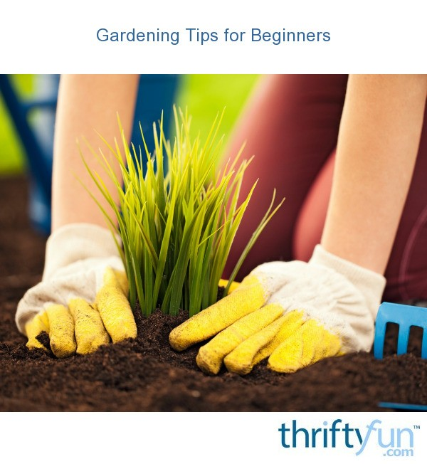 Gardening tips for beginners thriftyfun - Gardening tips for beginners ...