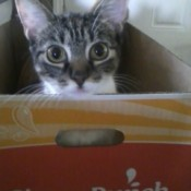 Kitty in box.