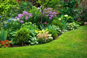beautiful garden