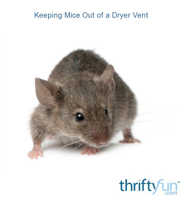 Keeping mice out of a dryer vent thriftyfun