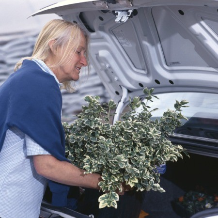 A woman putting plants in her car.