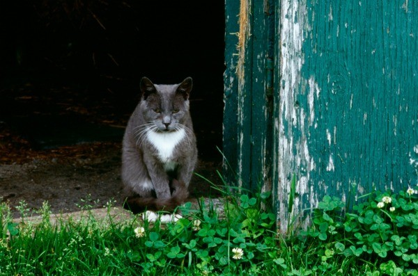 Stray cat in a doorway.