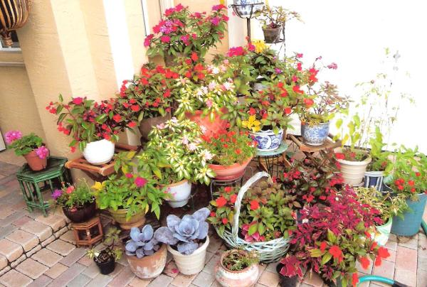 Foyer Plants : Potted plants beautify your home entry thriftyfun