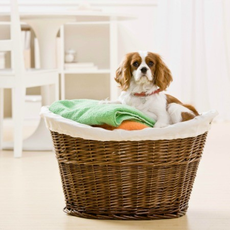 A cut dog sitting in a basket of clean laundry.