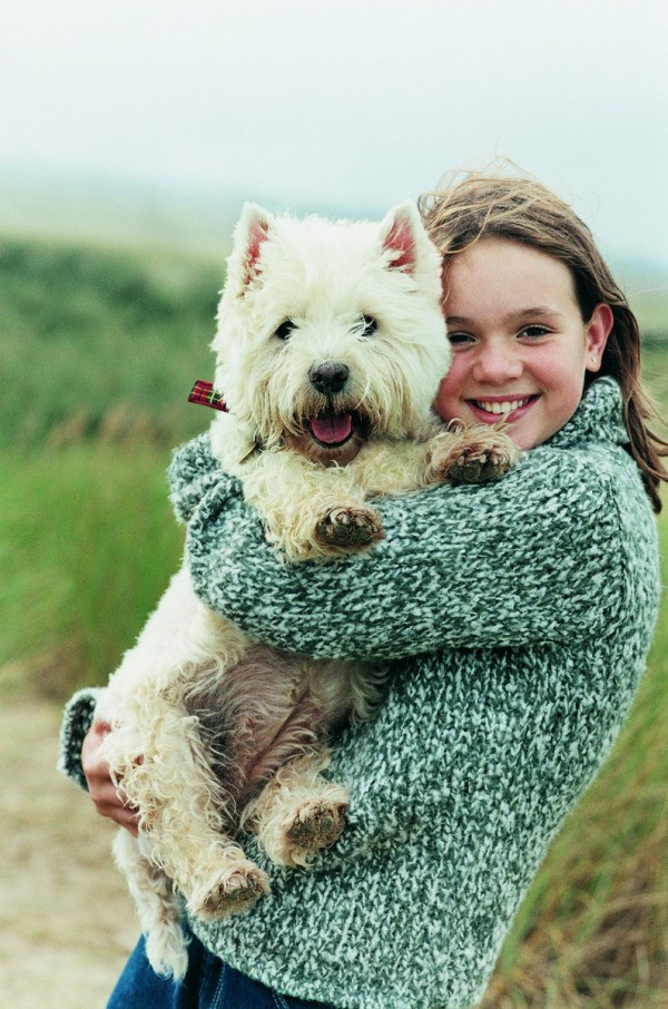 West Highland White Terrier being held by a young girl.