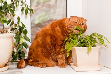 A cat eating a houseplant.